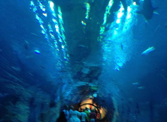 Acquario nella Dubai Mall