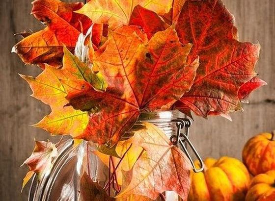 Raccolta di foglie
