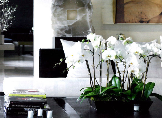 Black and white con orchidee